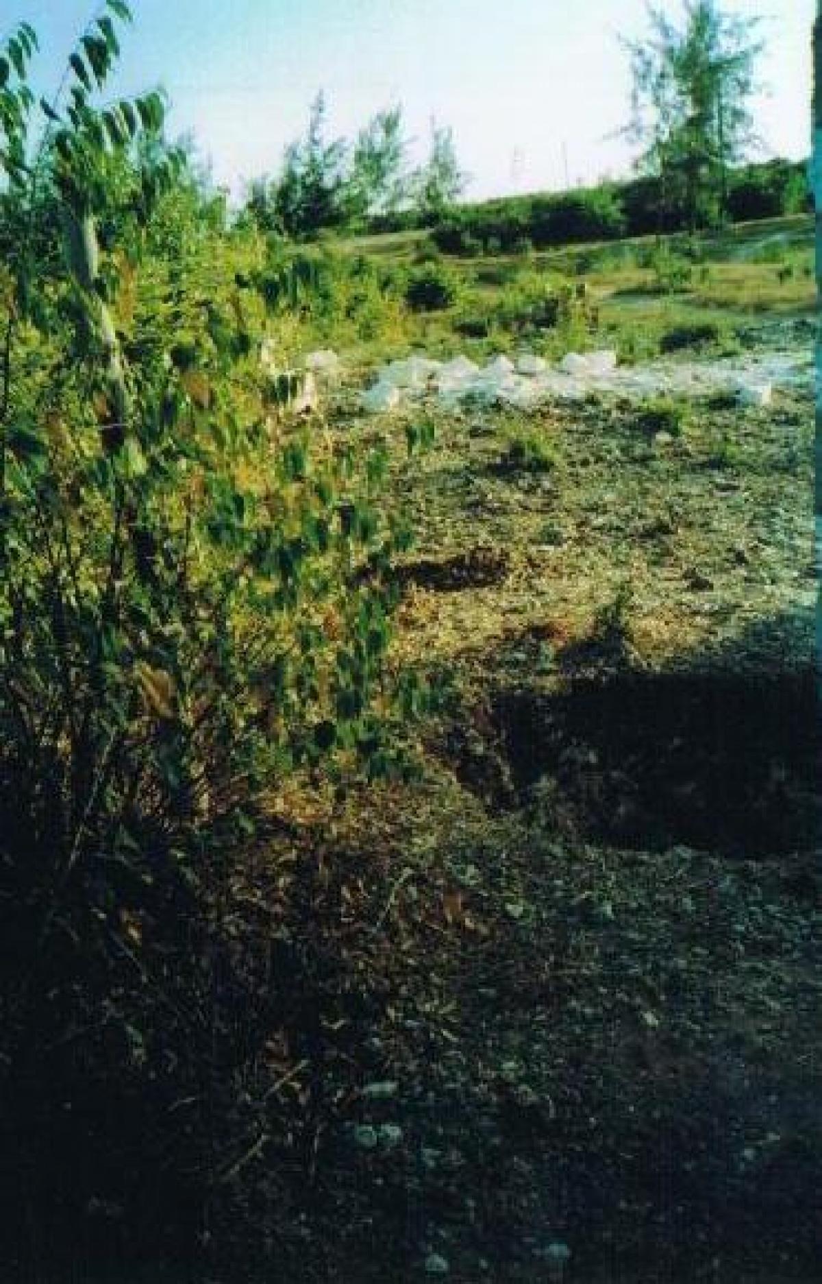 Terreno,VENDITA,1038